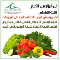 ضرورة رش المبيدات الفطرية على المزروعات للوقاية من الامراض الفطرية