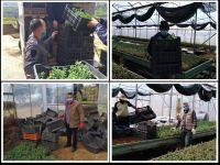 مشروع توزيع شتول الزعتر على المزارعين في قرى وبلدات الاتحاد